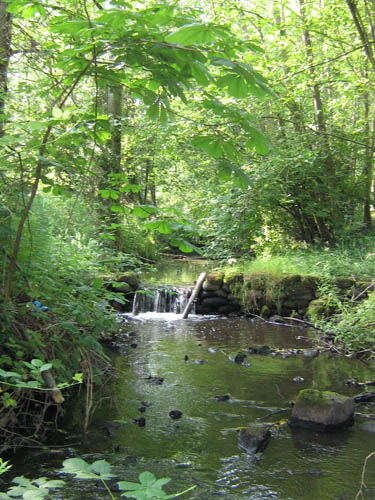 Photo of small waterfall in forested stream created by weir constructed of concrete-filled sandbags