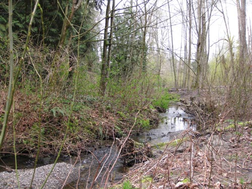 Photo of small stream flowing through forest