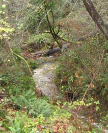 Photo of Sequoia Creek tributary to Walker Creek in Normandy Park