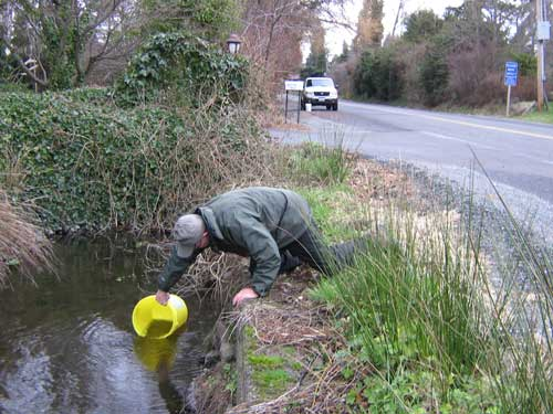 Photo of man lowering bucket filled with small fish into a stream next to a road