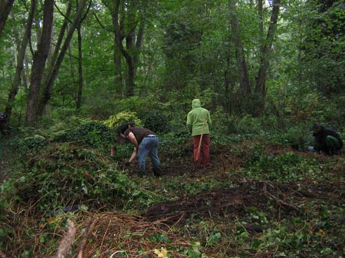 Photo of people clearing ivy from the ground in a forest.