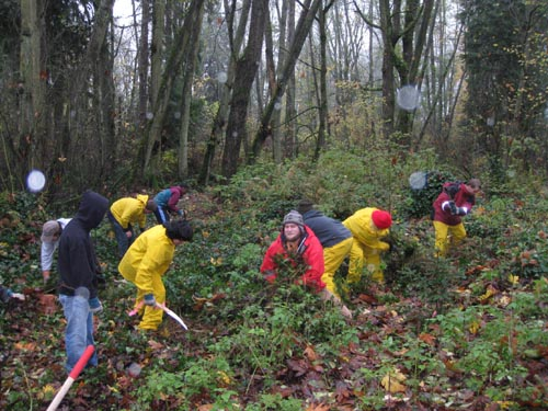 Students in yellow rain gear clearing ivy from the forest floor