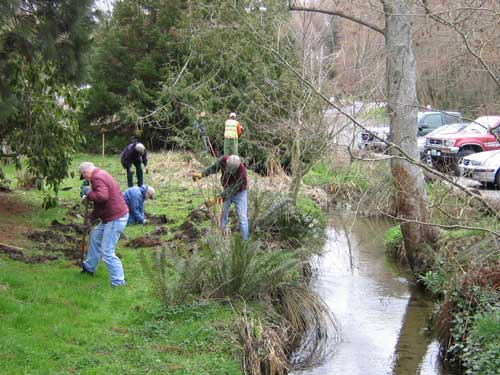 Photo of volunteers planting alongside a stream