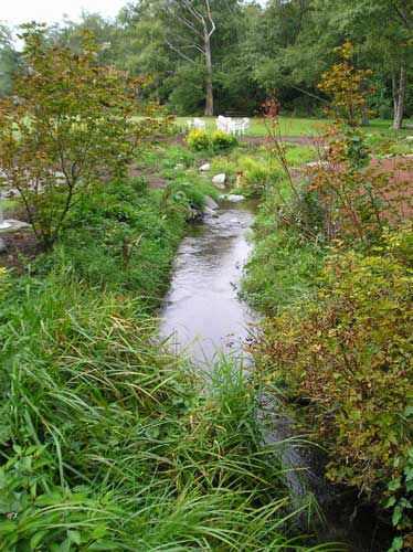 Photo of creek showing young native plants