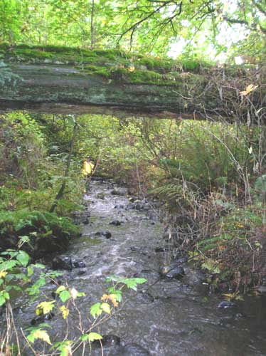 Photo of Walker Creek showing nurse log over the stream