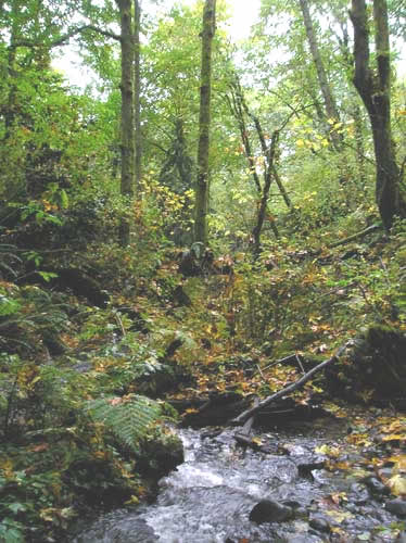 Photo of Walker Creek in the ravine with forest on both sides of creek