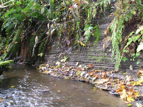 Photo of slowly-eroding stream bank along Walker Creek in the ravine