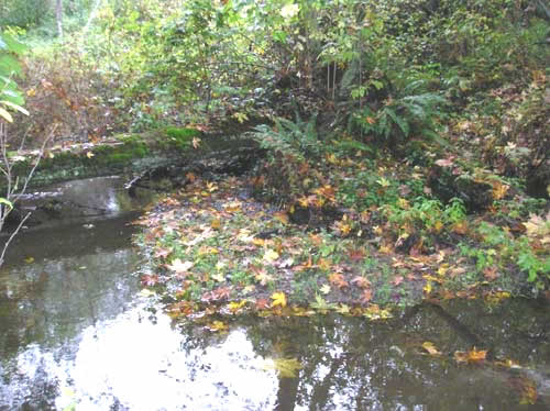 Photo of Walker Creek showing leaves of big leaf maples on the water