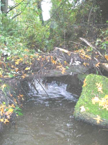 Photo of Walker Creek showing small log jam