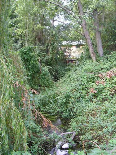 Photo of Walker Creek where stream is barely visible due to invasive weeds along bank