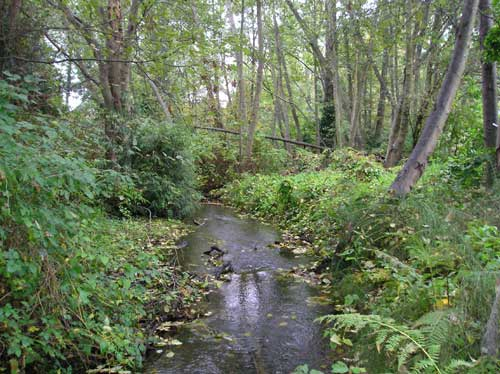 Photo of Walker Creek showing stream flowing thorugh forested area