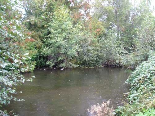 Photo of pond surrounded by native trees and invasive blackberry