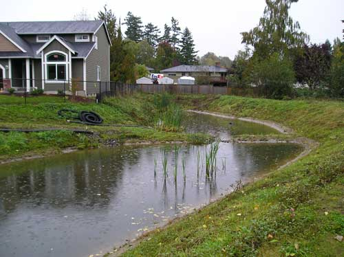 Photo of stormwater detention pond with cattails growing in it