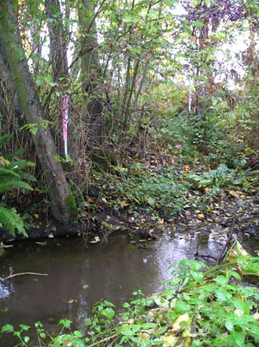 Photo of Walker Creek in wetland east of 1st Ave. S.