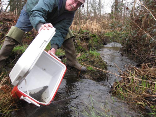 Photo of man emptying water and small fish from an ice chest into a stream