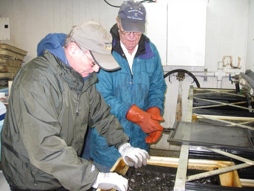 Photo of two men pulling a tray from a rack.  The tray contains small fish.