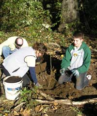 Photo of three people planting a tree (Miller Creek Renewal at S. 144th Way in Burien October 2007)