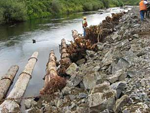 An image of the use of large wood as river bank protection against erosion on the Green River.