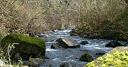 Boise Creek near Enumclaw - tributary to the White River