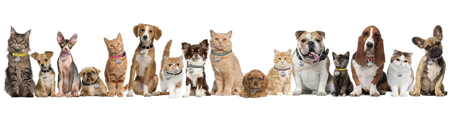 More Dogs Or Cats As Pets In Us