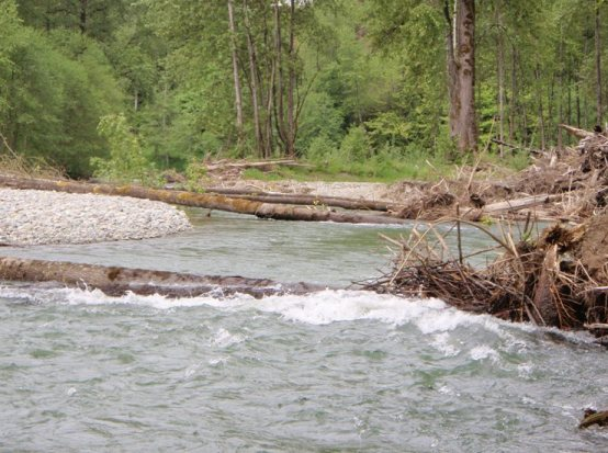 Logs spanning the Tolt River downstream of SR 203. May 2011