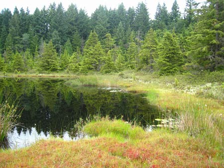 Bog in King County