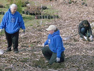SIT -  Snoqualmie Tribal members work with volunteers for restoration planting at Tolt MacDonald Park along Tolt River