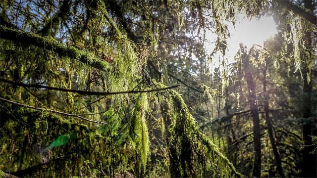 Trees, moss and sunlight