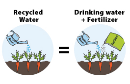 watering with recycled water versus watering with drinking water and fertilizer